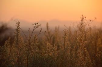 Many grass seeds, Namibia